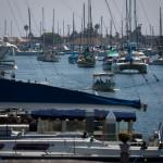 newport beach harbor and yachts