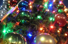 Christmas tree lights. Photo by Colleen Park.