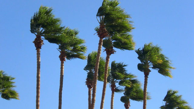 Gusts shake palm trees. Photo via Pixabay