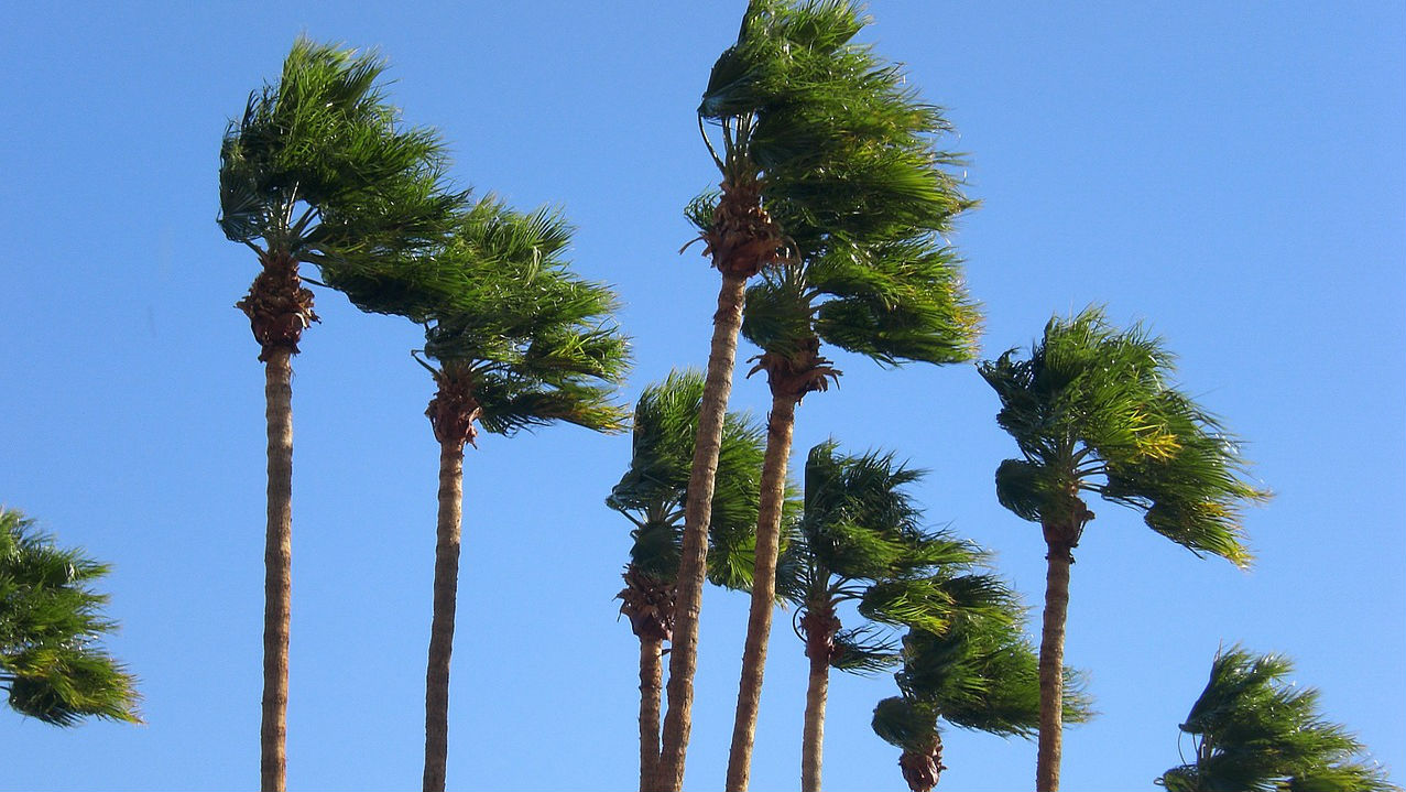 Gusts shake palm trees. Photo via Pixabay