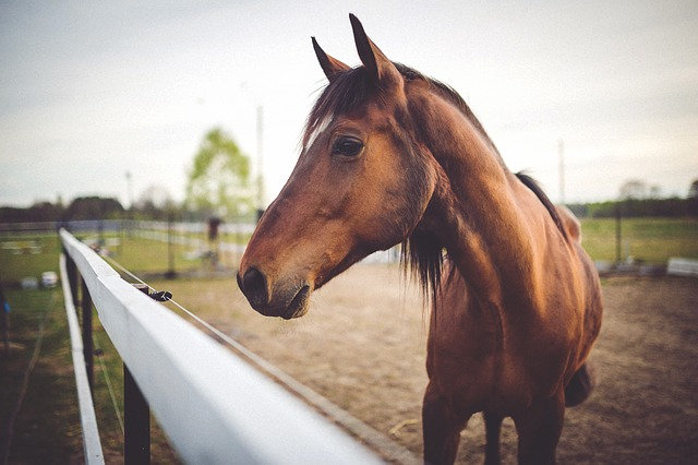 Elite thoroughbred race horses killed in California wildfire