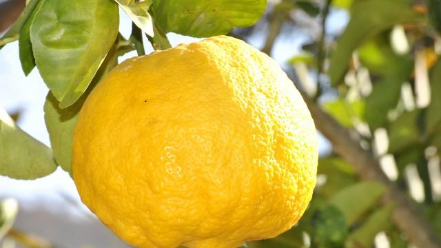 lemon example