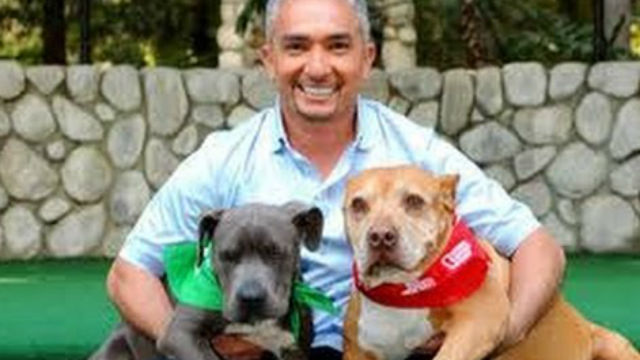 Dog Whisperer With Cesar Millan Season  Episode