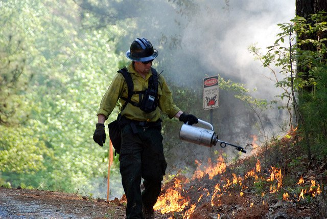 A U.S. Forest Service firefighter battles the Sand Fire. Courtesy U.S. Forest Service
