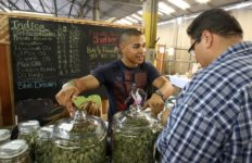 Grower selling marijuana