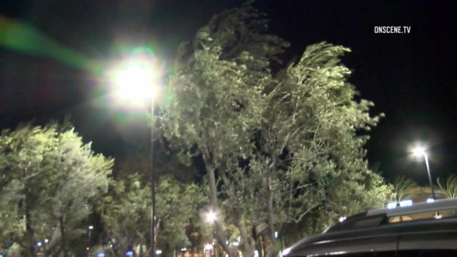 Cold, gusty winds sway trees in Irvine overnight. Courtesy OnScene.TV