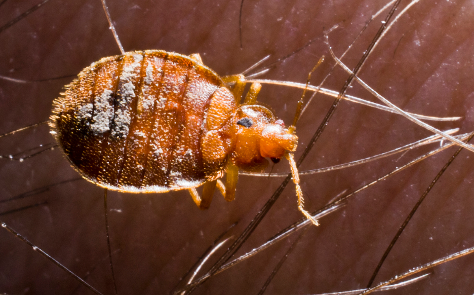 Bed Bug Lawsuit Los Angeles