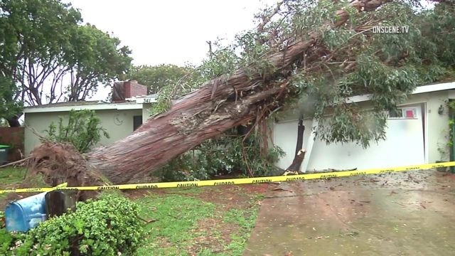 Twenty trees fell in the city of Garden Grove due the season's biggest storm. In Costa Mesa, this tree crashed onto a home. Photo via OnScene,TV.