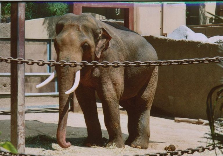 Billy the elephant. Photo from Billy the Elephant Facebook page.