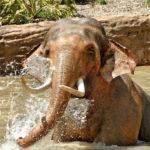 Billy the elephant