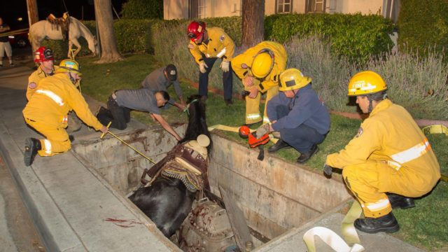 Riverside Fire Department personnel with the trapped horse. Photo by Riverside Fire Department retired Capt. Bob Markin.