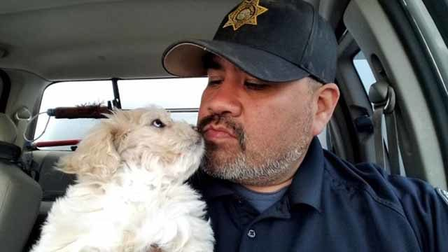Marcel Martinez found poodle mix Blanca after crash. Photo via Patch.com