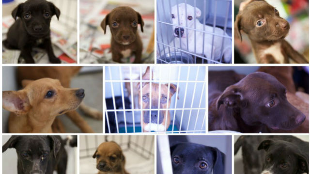 Rescued canines in Corona