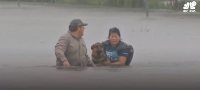 Two Hurricane Harvey survivors navigate floodwaters while carrying a worried looking dog in their arms.