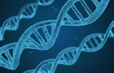 Three DNA strings.
