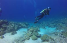 An example of a person SCUBA diving. Photo from Pixabay.