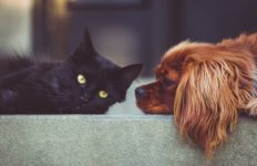 A dog and cat relax together. Photo from Pixabay.