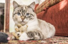 """Almost 15 animal """"adoption parties"""" are being held in LA and Orange counties in connection with the Hallmark Channel's """"Kitten Bowl V."""" Photo from Pixabay."""