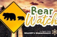 Sheriff's bear watch logo