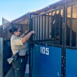 Sheriff's deputy with rescued horse