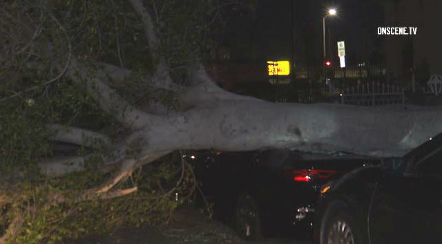 A tree down in Inglewood