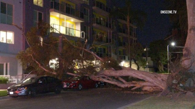 Tree falls on apartment building in Brentwood