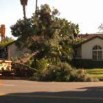 Wind blows down tree in Granada Hills