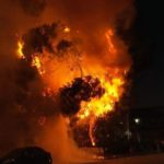 Tree ignited by fireworks